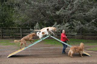 Group Agility